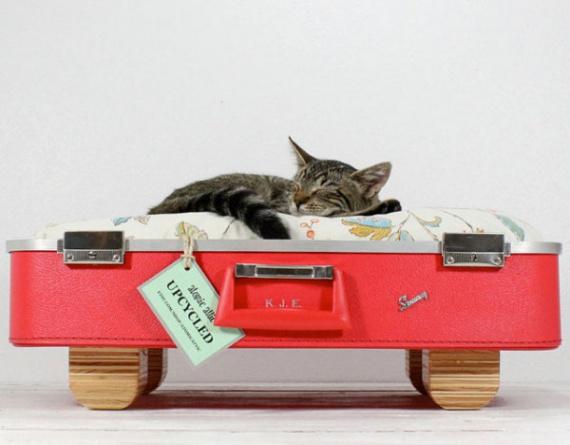 чемодан для котов