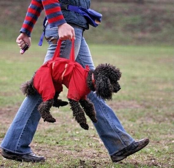 Doggie bag - гибрид собачьего костюмчика и переноски от Intimsport